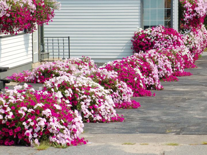 Front Garden Ideas To Make The Front Section Of House Beautiful