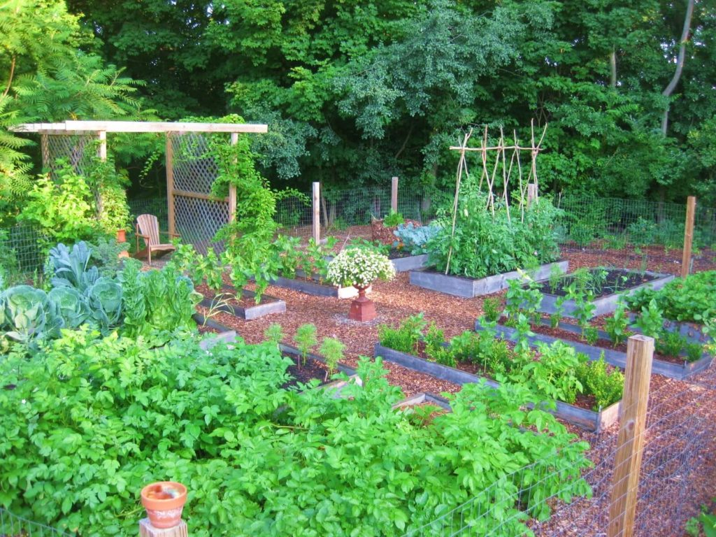 Tips to Improve Soil Quality of The Garden