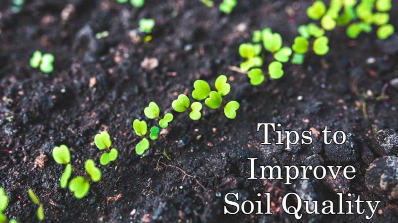 8 Tips to Improve Soil Quality of Your Garden