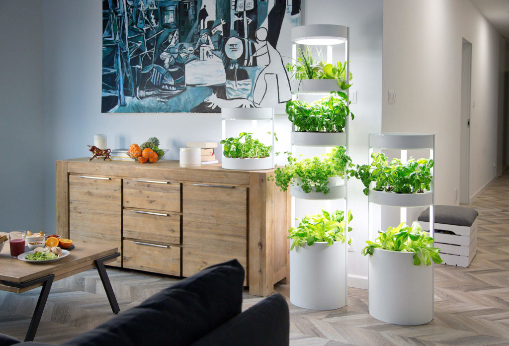 How to Make a Garden in Your Home?