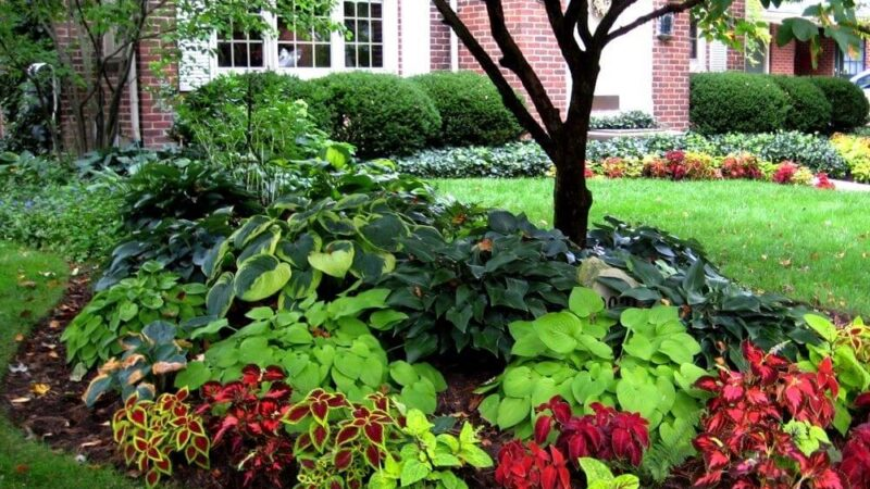 13+ Scenic and Picture-Perfect Shade Garden Ideas To Go For!