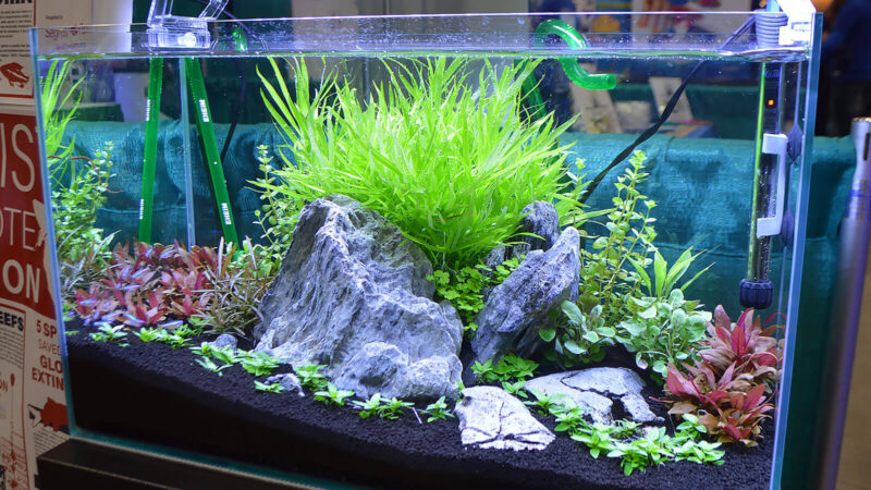 Fish Tank Ideas: 9 Different Types and Attractive Decor!