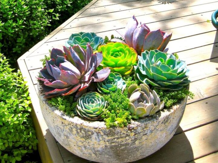 Grab Anybody's Attention with These Succulent Planter Ideas