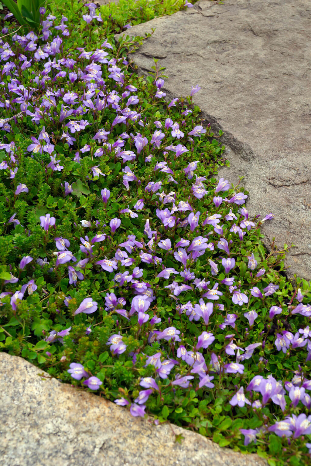 best ground cover plants