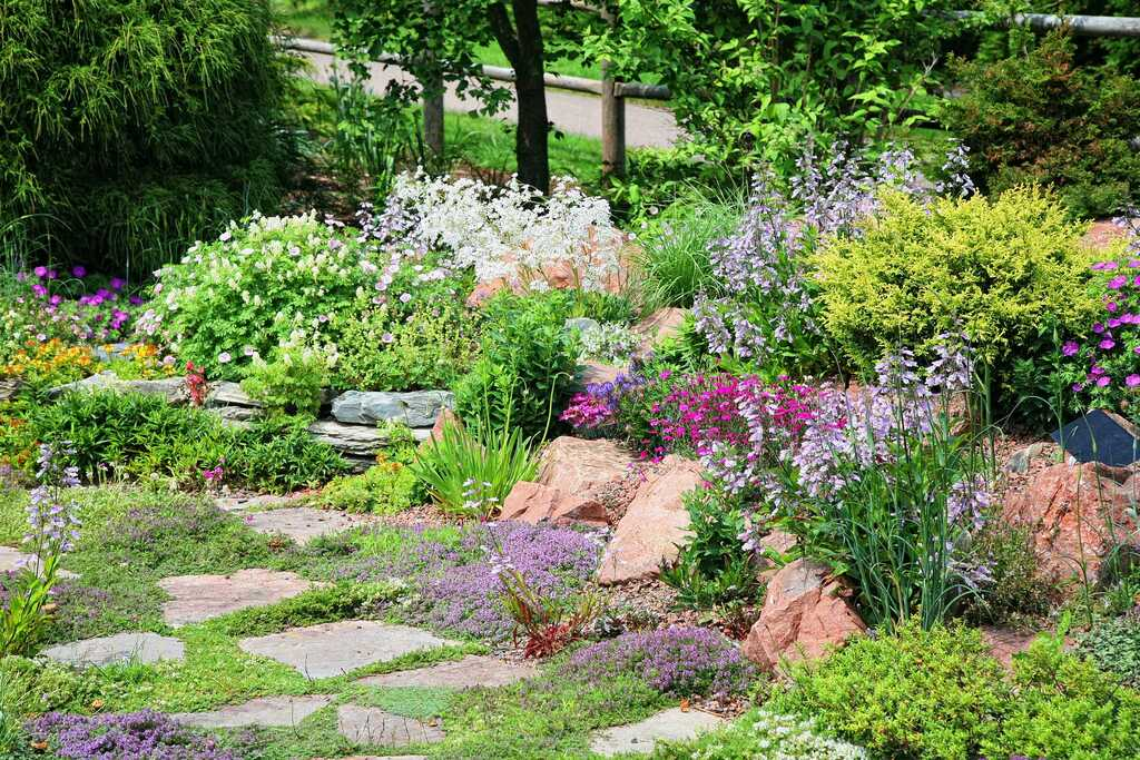 Know All About Ground Cover Plants