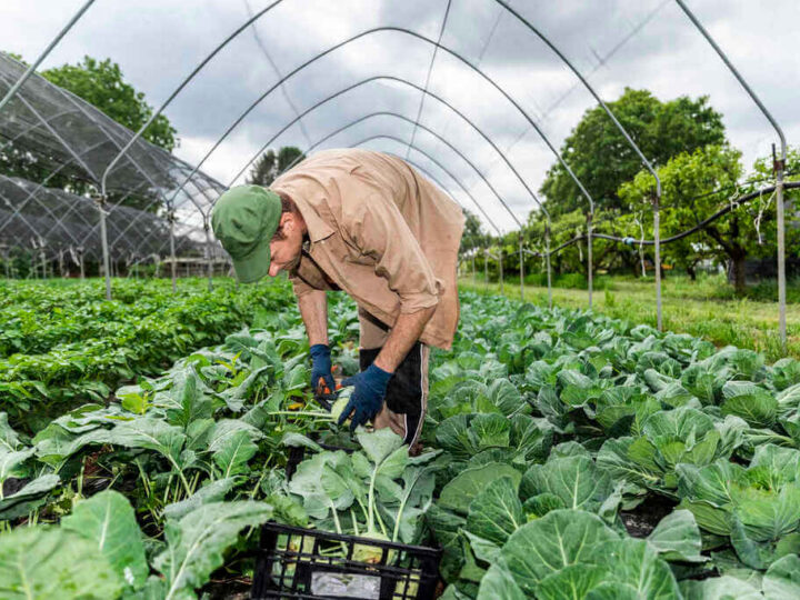 A Step-By-Step Guide to Growing Vegetables in a Greenhouse